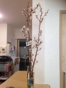 ひな桜カウンター